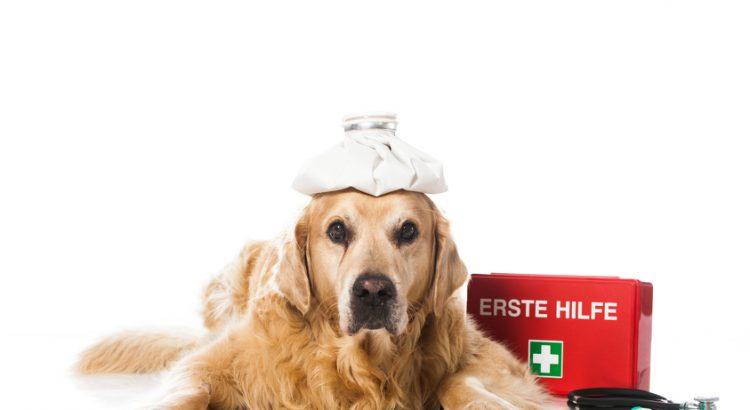 vendita medicinali veterinari on line